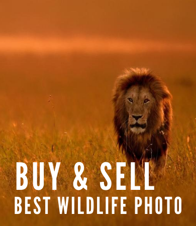 https://photography.discoverafricaa.com/wp-content/uploads/2020/08/best-photo-prints-390x450.png